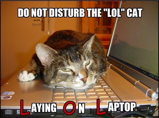 """DO NOT DISTURB THE """"LOL"""" CAT"""