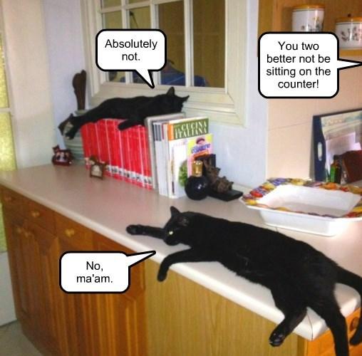 Lying cats.