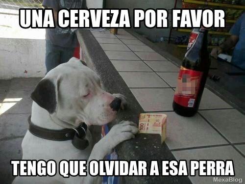 una cerveza por favor