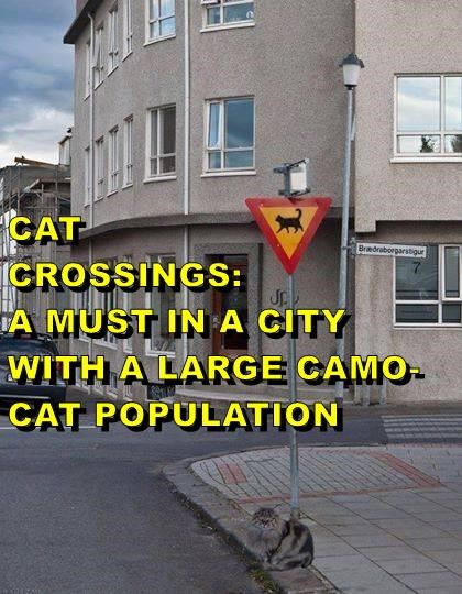 CAT                                     CROSSINGS:                                 A MUST IN A CITY WITH A LARGE CAMO-CAT POPULATION