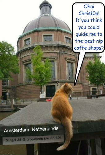 An American cat in The Netherlands