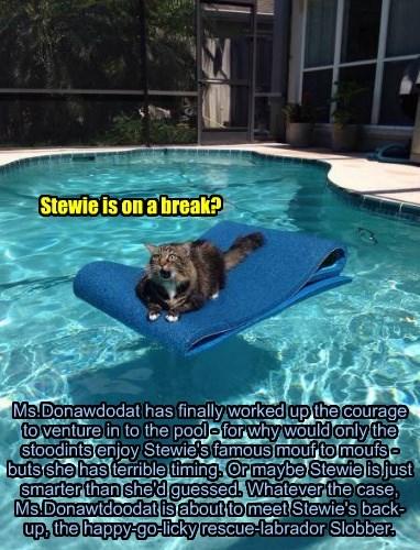 Stewie is on a break?