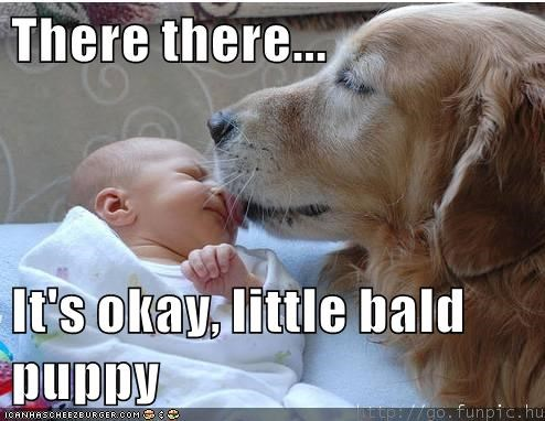 animals cute dogs captions funny - 8560727552
