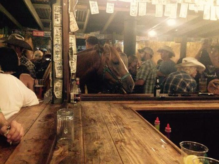 party-fails-a-horse-walks-into-a-bar