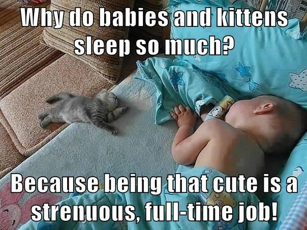 Why do babies and kittens sleep so much?  Because being that cute is a strenuous, full-time job!