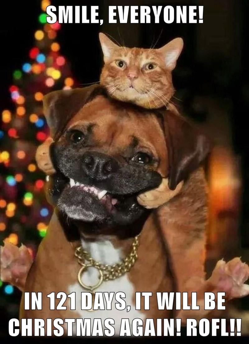 animals cat caption dogs christmas 121 days - 8560800512