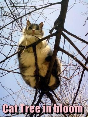 Cat Tree in bloom