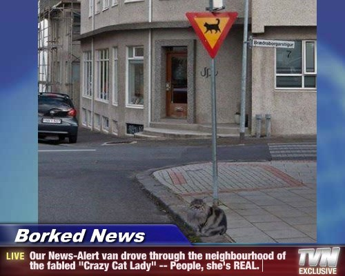 """Borked News - Our News-Alert van drove through the neighbourhood of the fabled """"Crazy Cat Lady"""" -- People, she's REAL."""