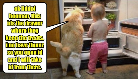 ok liddol hooman, this ids the drawer where they keep the treats. i no have thumz so you open id and i will take id from there.