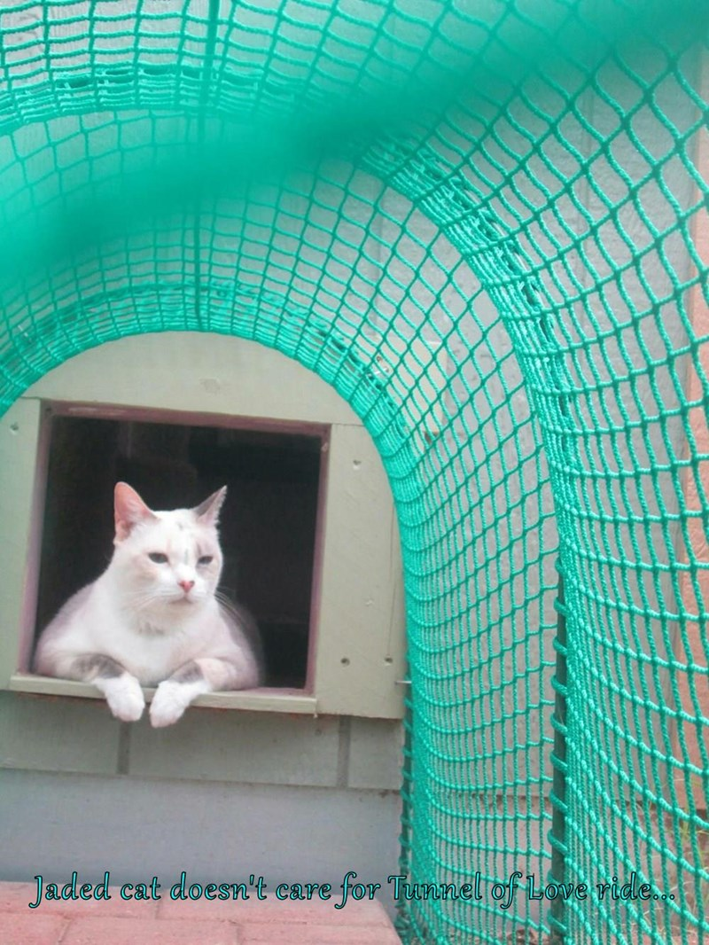 Jaded cat doesn't care for Tunnel of Love ride...