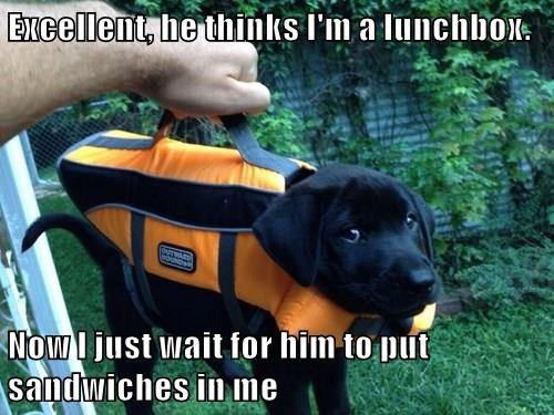 animals dogs captions funny - 8561028096