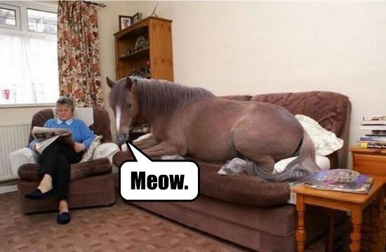 captions funny horse - 8561049600