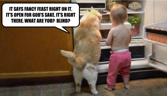 canned food noms caption fridge Cats funny - 8561113344