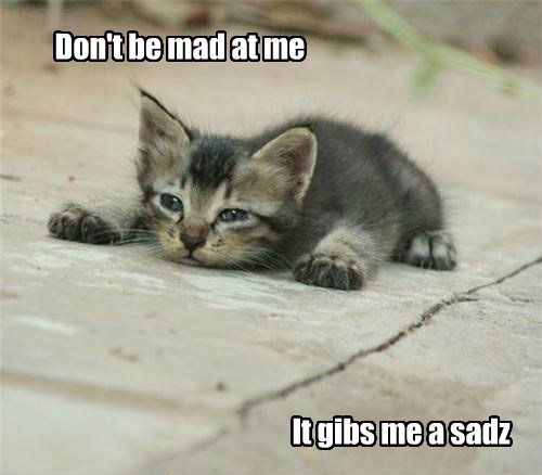 I not a pest, I just a widdle kitteh