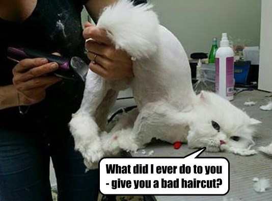 What did I ever do to you - give you a bad haircut?