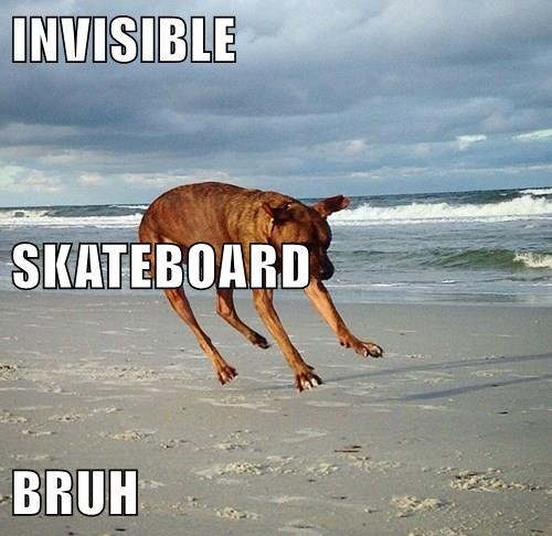 animals dogs invisible skateboard caption - 8561281792