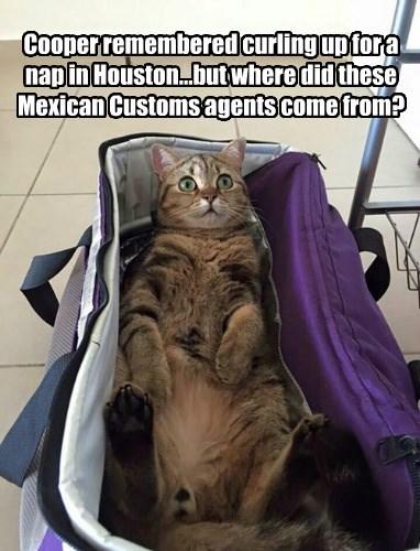 Mira! Un Gato Grande!