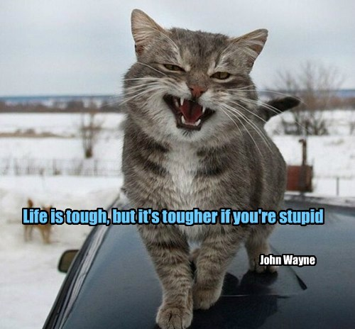 caption john wayne Cats quote funny - 8561405952