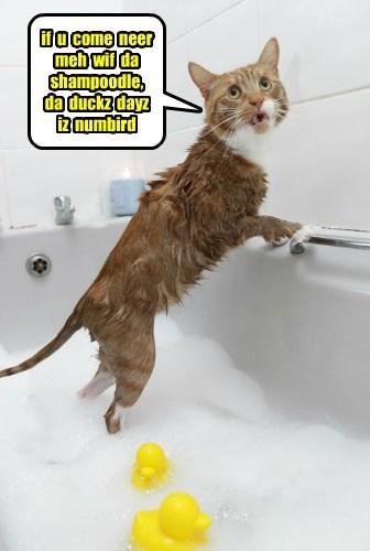 if  u  come  neer  meh  wif  da   shampoodle,   da  duckz  dayz  iz  numbird