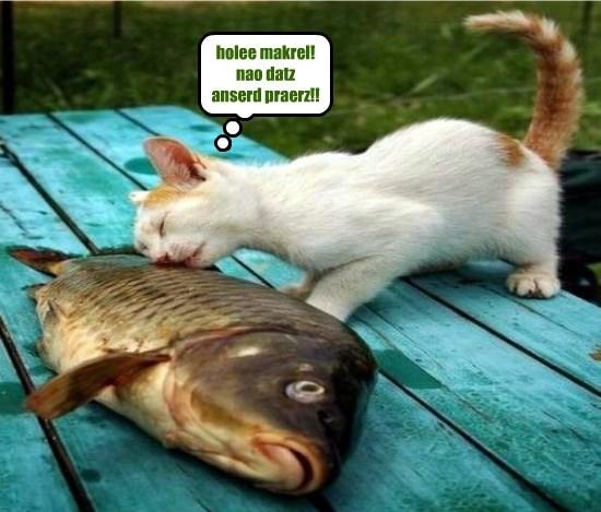 holee makrel!  nao datz anserd praerz!!