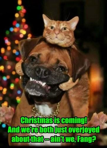 christmas cat dogs overjoyed caption - 8561613312