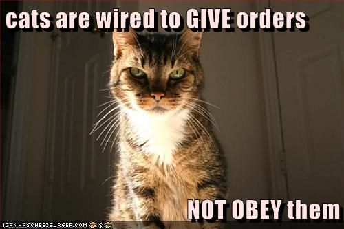 animals orders Wired not caption give Cats obey - 8561710848