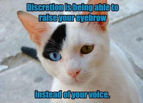 voice eyebrows caption Cats funny - 8561739520
