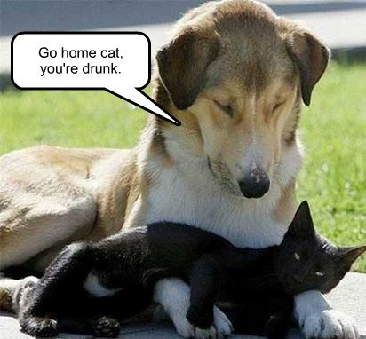 Go home cat, you're drunk.