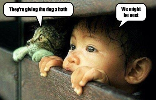 They're giving the dog a bath