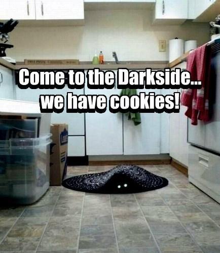 basement cat,caption,Cats,funny,cookies