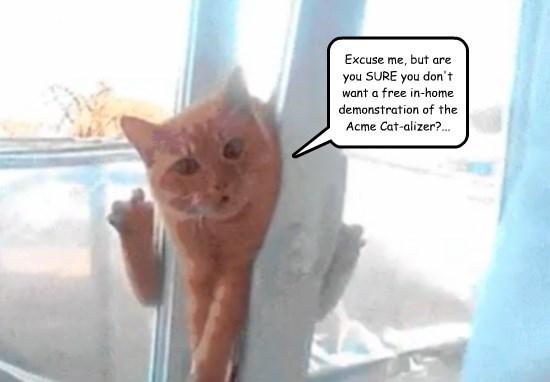 captions Cats funny - 8562063360