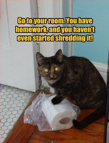 homework shred caption Cats funny - 8562084096