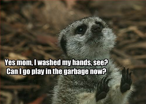 meerkat captions funny - 8562134528