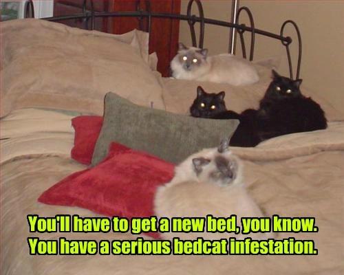 captions Cats funny - 8562161664