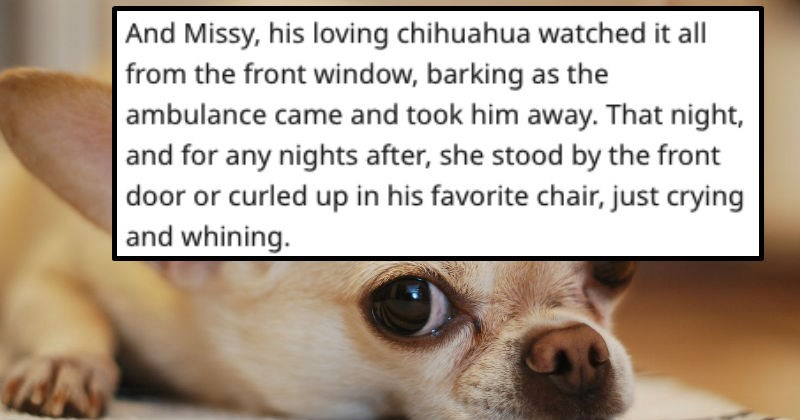 Sad dogs veterans feels painful loss dad chihuahua grief story awful - 8562181