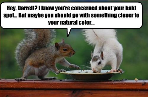 squirrel captions funny - 8562190080