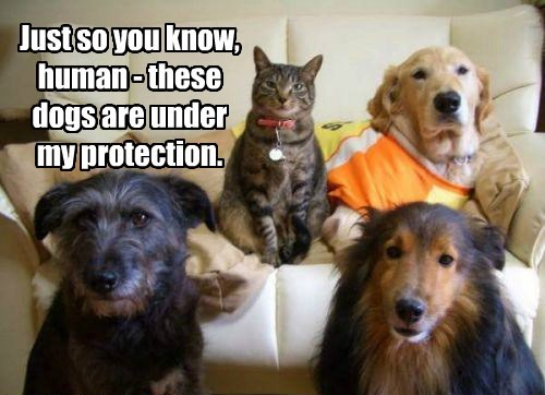 Just so you know, human - these dogs are under my protection.