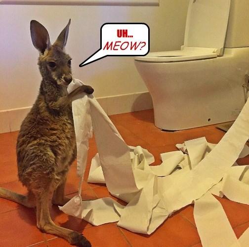 kangaroo captions funny - 8562195200