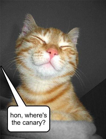 captions Cats funny - 8562226944