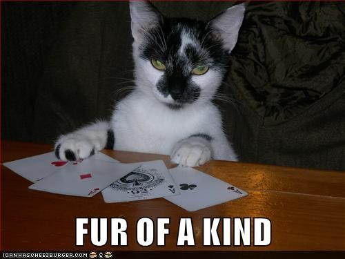 cat,four of a kind,caption,poker