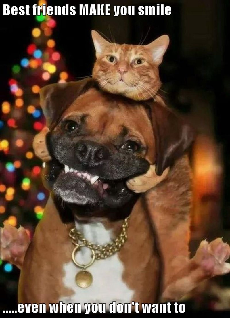 dogs,best friends,kitten,caption,smile