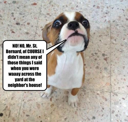 street st bernard puppy way caption - 8562321920