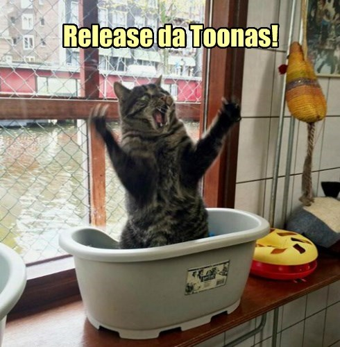 tuna food caption Cats funny - 8562471680