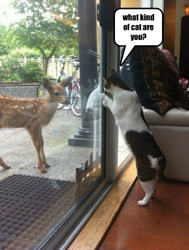 captions deer Cats funny - 8562490624
