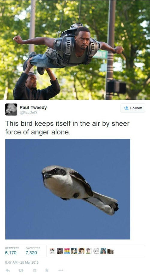 superheroes-falcon-marvel-stay-in-air-will-bird-meme