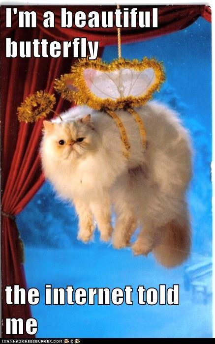animals captions Cats funny - 8562556160