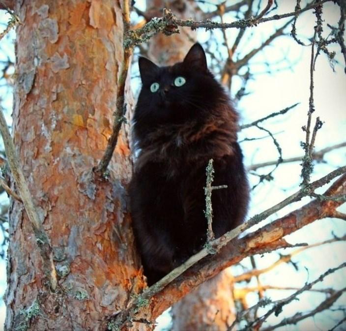 funny cats image ... Hoot?