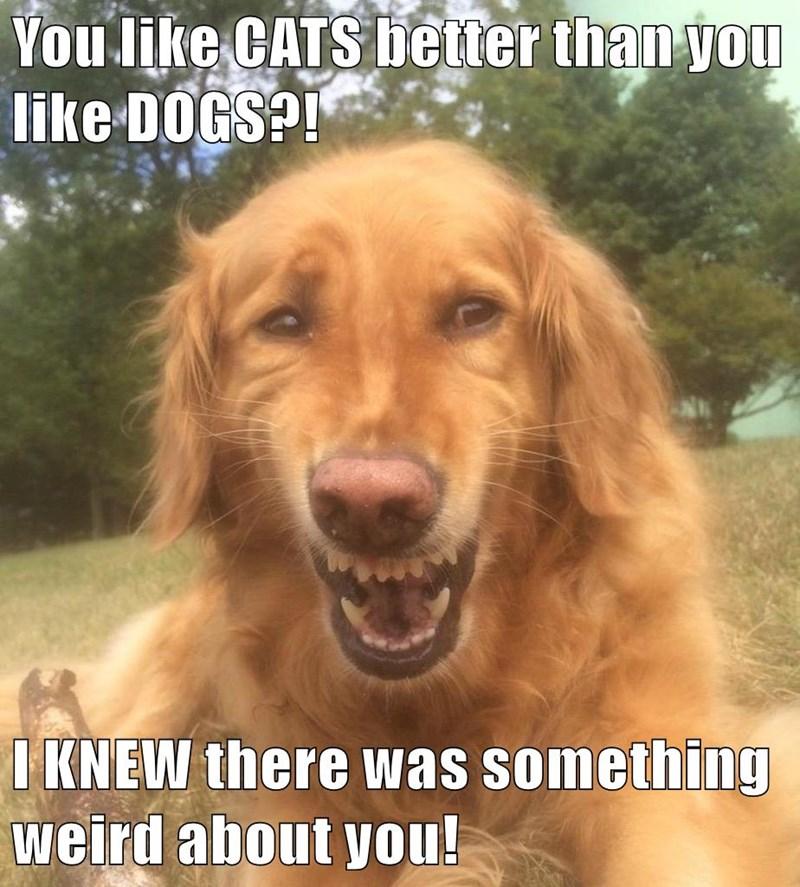 animals dogs caption funny - 8562588928