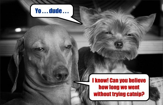 dogs,catnip,first time,caption,trying