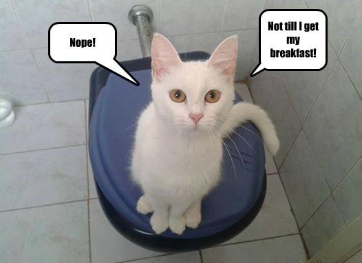 captions Cats funny - 8562797312